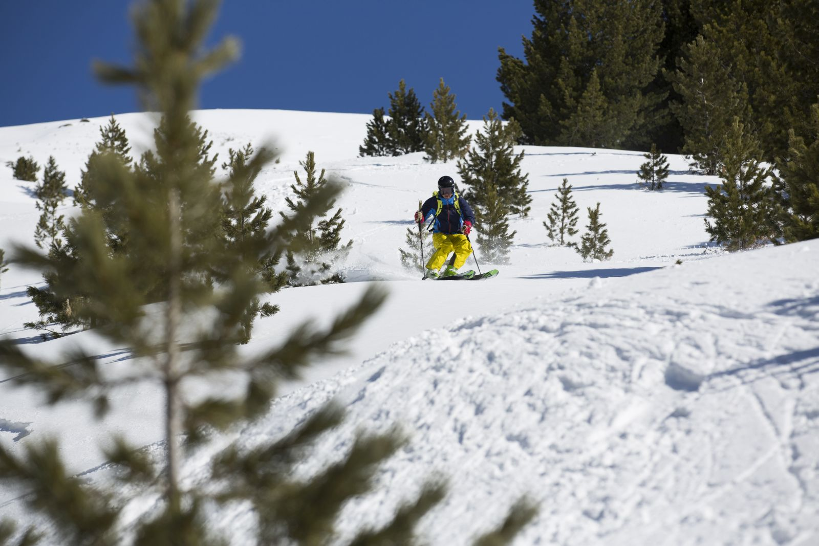 Skier in a young forest skiing down